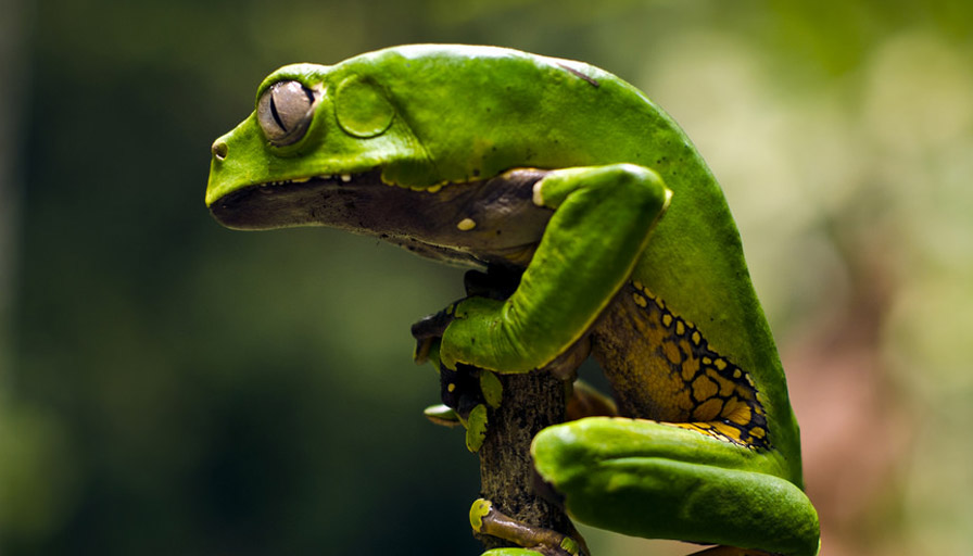 Investigating Kambô