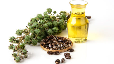 Castor Oil as an Anti-Parasitic